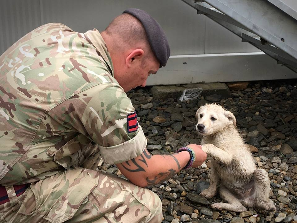 Army Reserve Royal Engineers from The R Mon RE(M) shakes the paw of a Romanian stray puppy.
