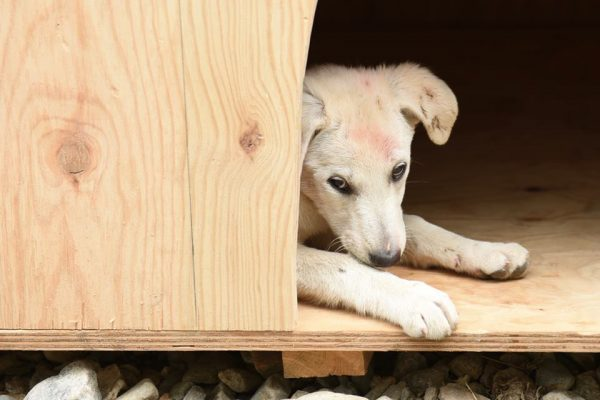 Army Reserve Royal Engineers from The R Mon RE(M) helped improve the lot of some stray puppies in Romania by constructing a kennel for them.